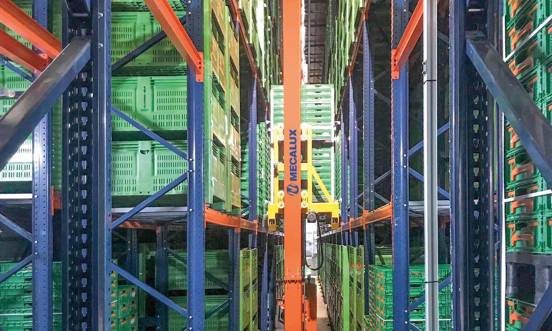 Kiwi Greensun: der perfekte Reifezeitpunkt für ein Kühllager